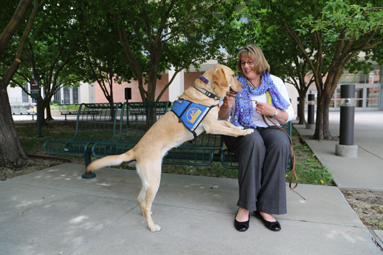 Elizabeth Holman demonstrates Waffle's ability to lean against patients on command, which Holman says brings comfort to PTSD patients at Denver's VA Medical Center. (Photo by Jake Stein, News21)